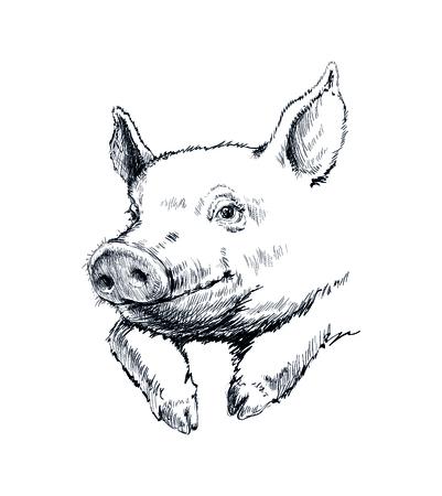 Hand Drawn Sketch Pig Vector illustration.