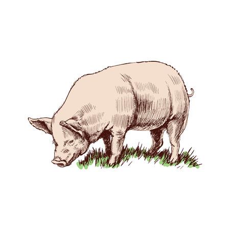 手の描かれたスケッチ豚ベクトル図