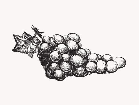 Grapes vector illustration. Ink line draw vector. Иллюстрация