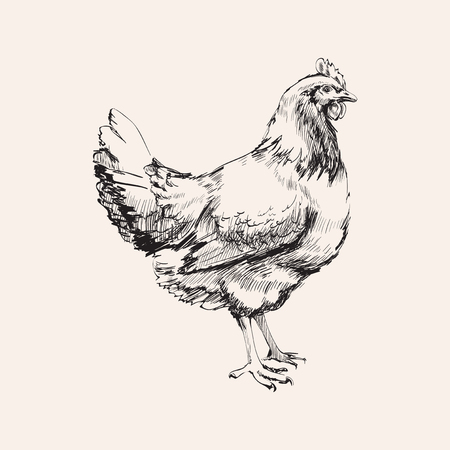 Hand Drawn Sketch Chicken Hen Vector illustration