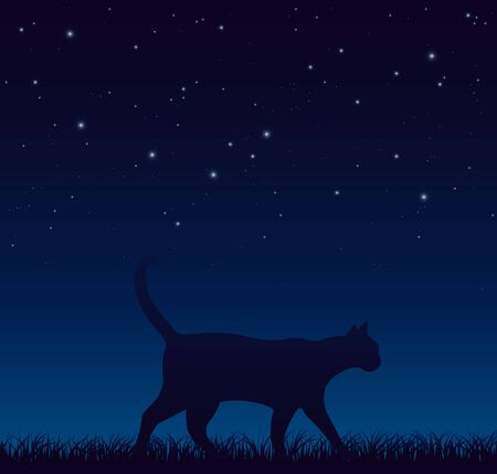 Cat Walking Peacefully During Starry Night