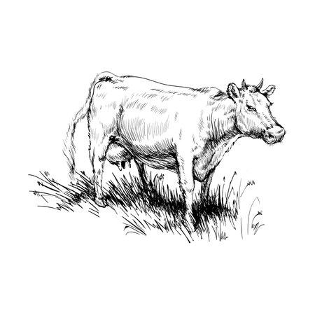 Cow Grazing Cattle Animal Husbandry Livestock Ilustração