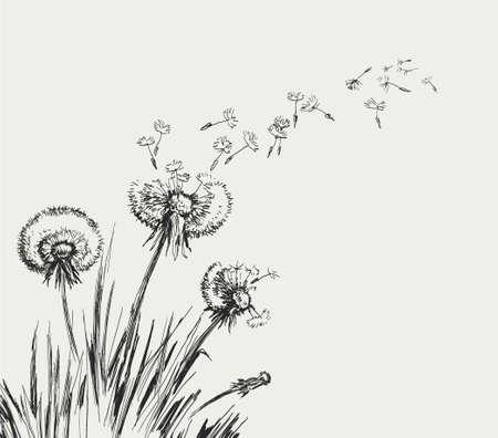 Dandelion, Flying Seeds of Dandelion Hand Drawn Illustration isolated on white Background Vetores