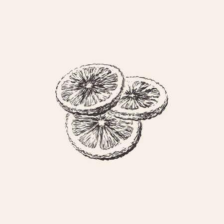 Round Lemon slices, Grapefruit, Orange, Citrus Hand Drawn Sketch Vector illustration Иллюстрация