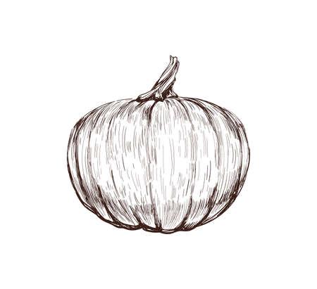 Pumpkin Hand Drawing Vector Illustration.