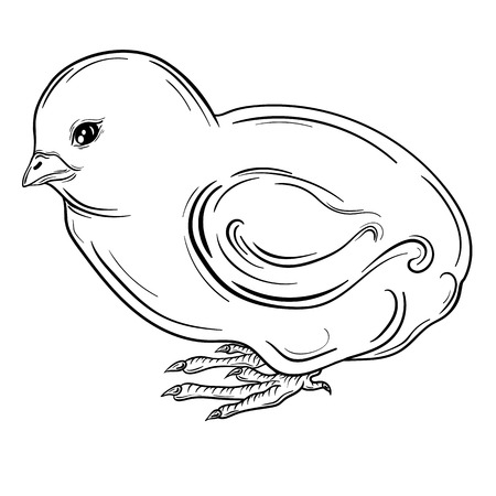 poult: Illustration Chick was created in black and white colors.  Painted image is isolated on white background.