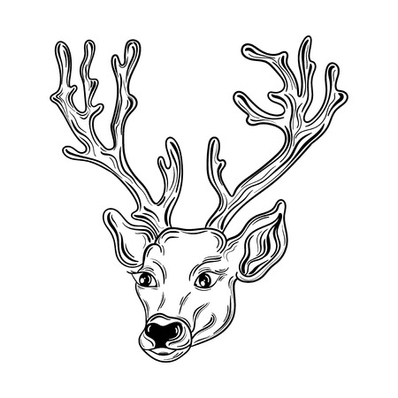 painted image: Illustration Deer head was created in black and white colors. Painted image is isolated on white background. Illustration