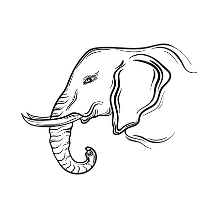 Illustration Elephant head was created in black and white colors.  Painted image is isolated on white background. Illustration