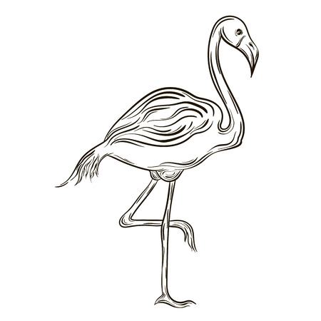 painted image: Illustration Flamingo was created in black and white colors.  Painted image is isolated on white background.