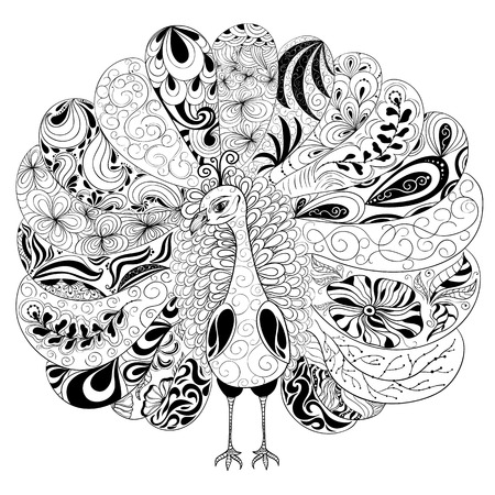 painted image: Vector illustration Peacock was created in doodling style in black and white colors. Painted image is isolated on white background. Illustration