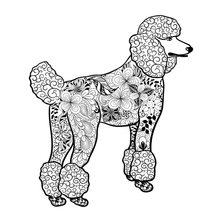painted image: Illustration Poodle Dog was created in doodling style in black and white colors.  Painted image with high details is isolated on white background.  It  can be used for coloring books for adult, shirt design. Animal collection.