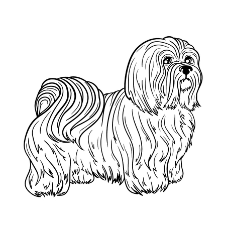 Illustration Maltese was created in black and white colors. Painted image is isolated on white background. It  can be used for coloring books for adult.