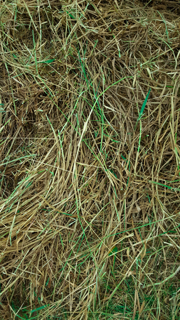 elusive: Background from texture of straw-abstract texture Stock Photo