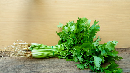 Coriander bunch on old wood Stock Photo