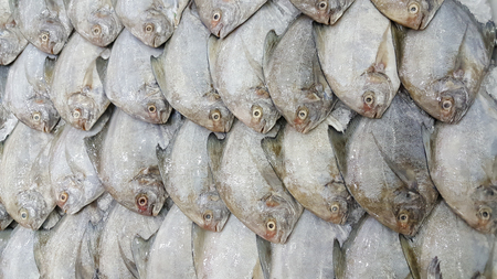 fish tail: White Pomfret Fishes