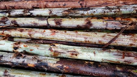 Stacked wood timber random size Stock Photo