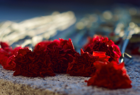 Carnations of scarlet color, laid to the day of memory, lie on a granite tombstone, brightly lit by the sun Фото со стока - 119082154