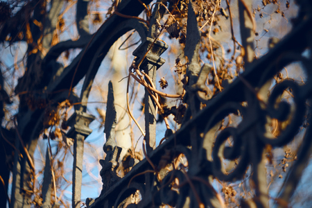 Metal twisted fence with patterns and stakes, overgrown with dried ivy in the autumn and illuminated by the sun
