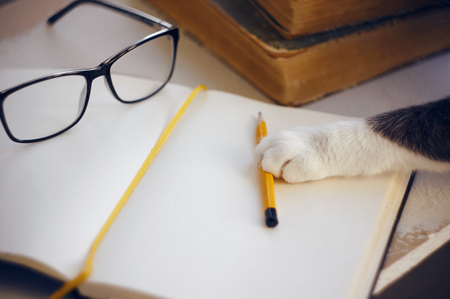 On the table are glasses, books, a pencil and a notebook, everything you need for education and business. Cat reaches for a pencil with his paw Фото со стока