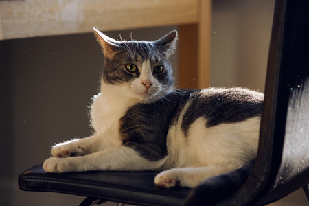 Striped house cat with green eyes, lying on a chair, looks in surprise at the dust flying around, illuminated by sunlight