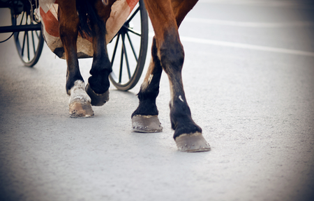 The legs of a brown horse harnessed to a carriage with large wheels that run along an asphalt street lit by light