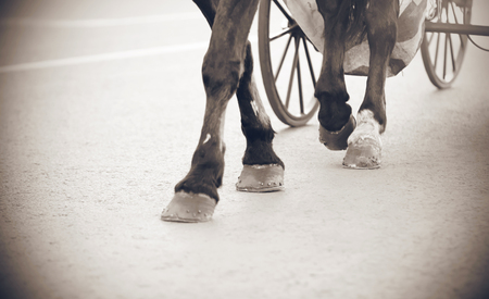 Black and white image of the legs of a horse, carrying a carriage on large wheels, which resembles a frame from a retro film.