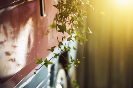 Pink retro truck on which as a decoration hanging ivy branches, illuminated by sunlight in the morning. Фото со стока