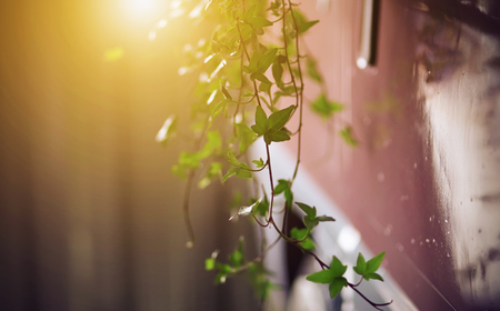 Twigs with ivy leaves hang like decorations from a pink wagon, illuminated by sunlight.