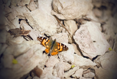 Spotted orange butterfly large tortoiseshell sitting on the warm rocks with open wings basking in the sun.