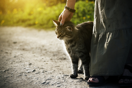 A woman in a long dress with a bracelet on her arm stroking a striped furry stray kitten that rubs against her legs.