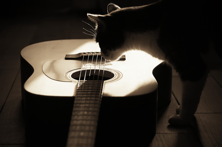Silhouette of a fluffy cat, illuminated by sunlight, interested in looking at the acoustic wooden six-string guitar in the Sepia filter Фото со стока