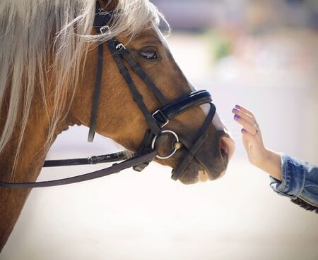 A girl in a denim jacket gently strokes a beautiful horse of a palomino suit with a long combed mane, illuminated by sunlight.