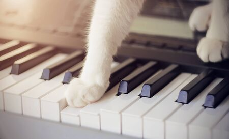 Cute bushy cat with white paws, illuminated by sunlight, with interest presses one paw on the key on the musical synthesizer, making a melodic sound. Even animals are drawn to creativity. Stockfoto
