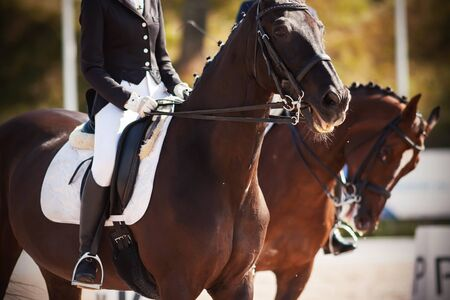 Beautiful horses, dressed in ammunition, with riders in saddles, participate in dressage competitions on a Sunny summer day. One of the horses neighed.