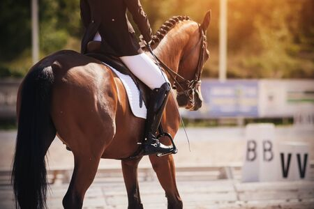 The rider in a black and white suit performs the task in equestrian competitions in dressage riding a beautiful Bay horse, dressed in ammunition for equestrian sports.