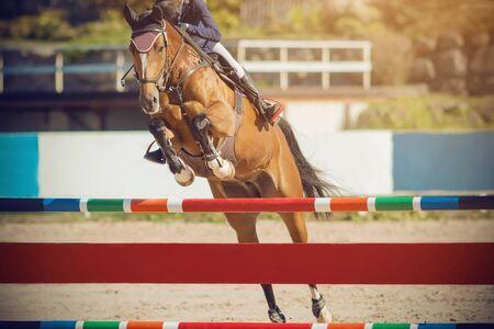 Un élégant cheval bai avec un cavalier en selle saute par-dessus une haute barrière multicolore par une journée ensoleillée lors d'un saut d'obstacles.