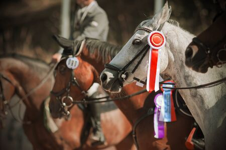 Awarding the winners of equestrian competitions in the equestrian ranks, where among the majority of bay horses is a light gray horse with a red rosette on the bridle.