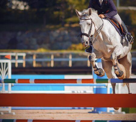 Ein weißes schönes starkes Pferd mit einem Reiter im Sattel springt bei Springwettbewerben im Sommer über eine bunte helle Barriere.