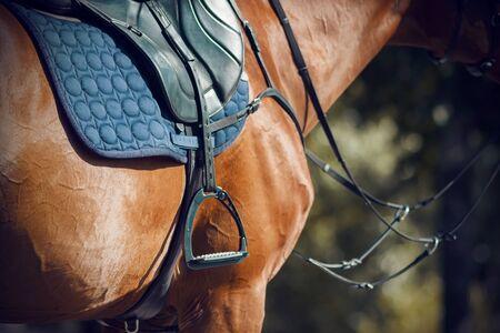 Auf einem roten Pferd mit glänzendem Fell, das einen Sattel, eine blaue weiche Schabracke und Steigbügel trägt, sowie auf der Schnauze ein Zaumzeug. Das Pferd wird durch angenehmes Sonnenlicht beleuchtet.
