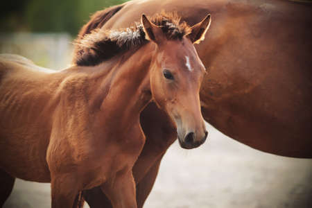 A Bay colt with a white spot on his forehead stands beside his mother in the sunlight.