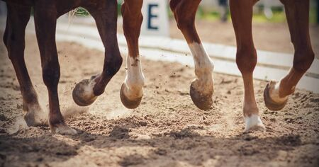 The legs of two horses galloping together across a sandy arena that perform in dressage competitions.