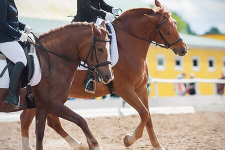 Two sorrel horses gallop across a sandy arena at a dressage competition together as a couple on a Sunny day. Stock fotó