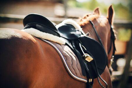 Widok z tyłu młodego konia szczawiowego z siodłem i czaprakiem na grzbiecie, oświetlonego światłem słonecznym latem.