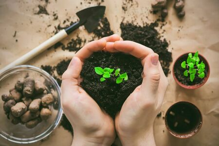 A person holds in his hands a loose soil from which grows a small green growth of a plant that needs to be transplanted into a pot. Фото со стока