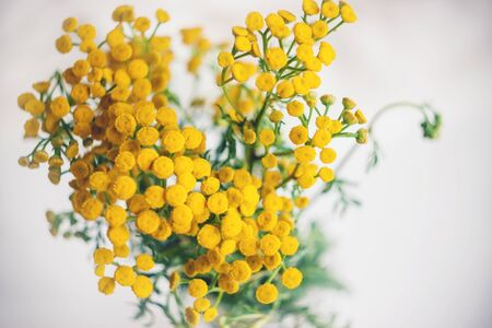 Top view of a beautiful bouquet of blooming yellow tansy flowers with green leaves on a white background.