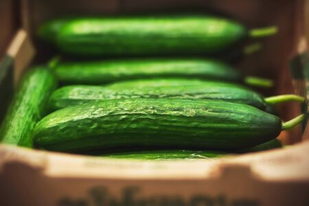 Ripe green cucumbers are in a cardboard box in a grocery store. Harvest. Transportation of products.