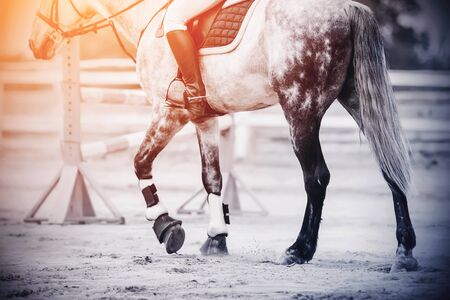 Hooves of a beautiful dappled gray horse with a rider in the saddle, which is walking on a sandy arena, where there is a barrier for show jumping competitions.