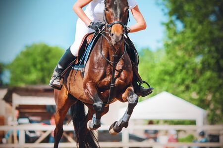 A Bay racehorse with a rider in the saddle jumps high at a show jumping competition on a Sunny summer day. Фото со стока