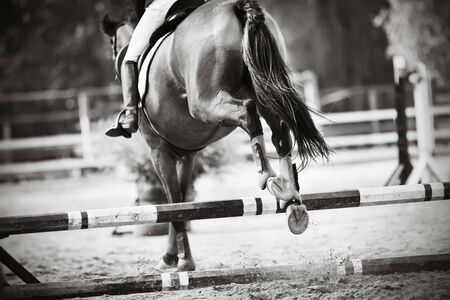Black-and-white image of a sports racehorse with a long tail jumping beautifully over a barrier at a show jumping competition. Rear view. Фото со стока