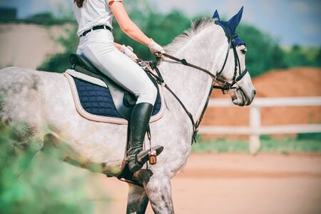 The equestrian rides in the saddle on a fast grey dappled horse that gallops in the paddock in the summertime.